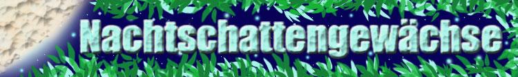 Nachtschattengewächse Banner