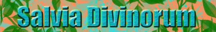 Salvia Divinorum Banner